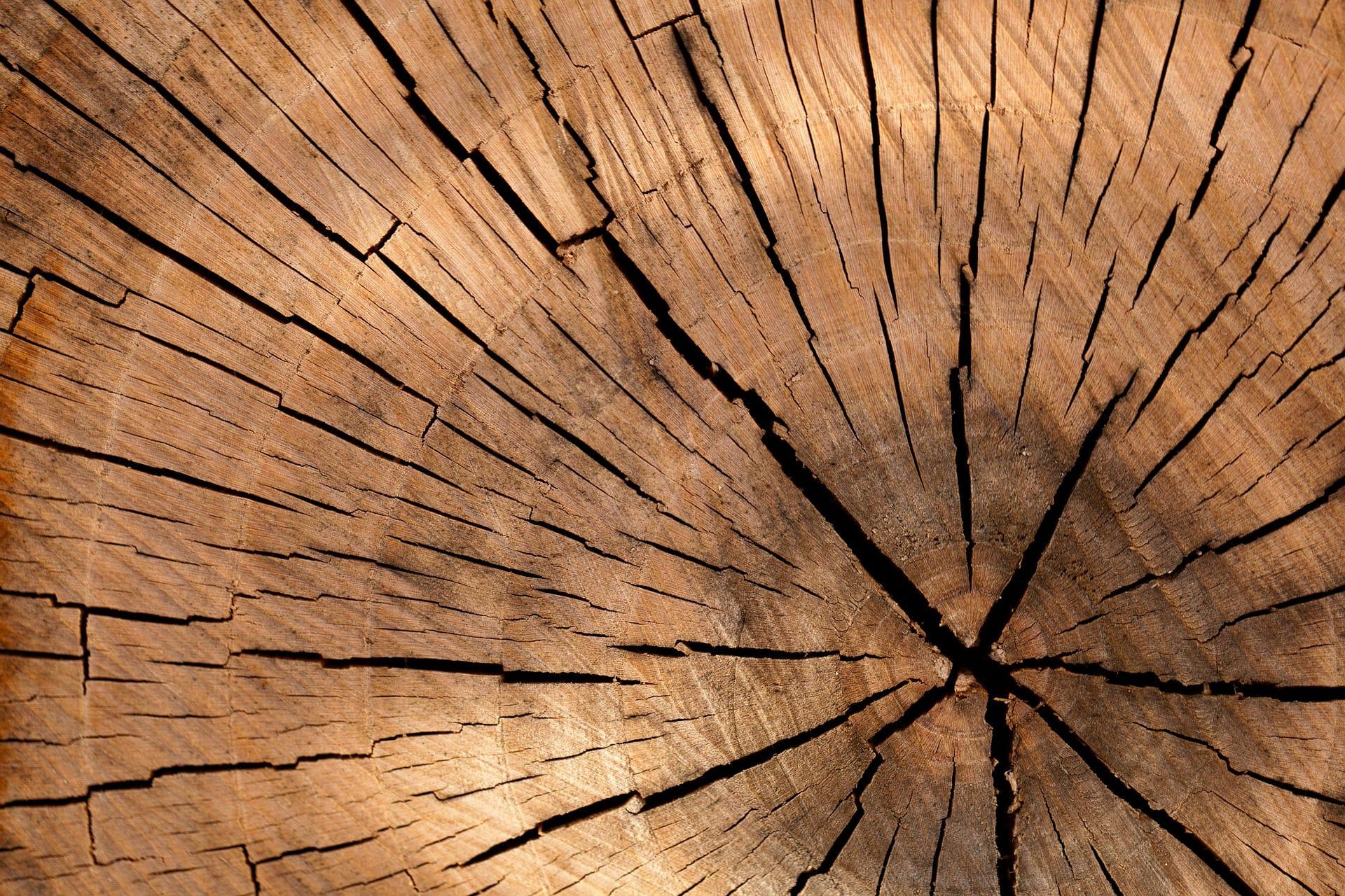 træ omviklede profiler